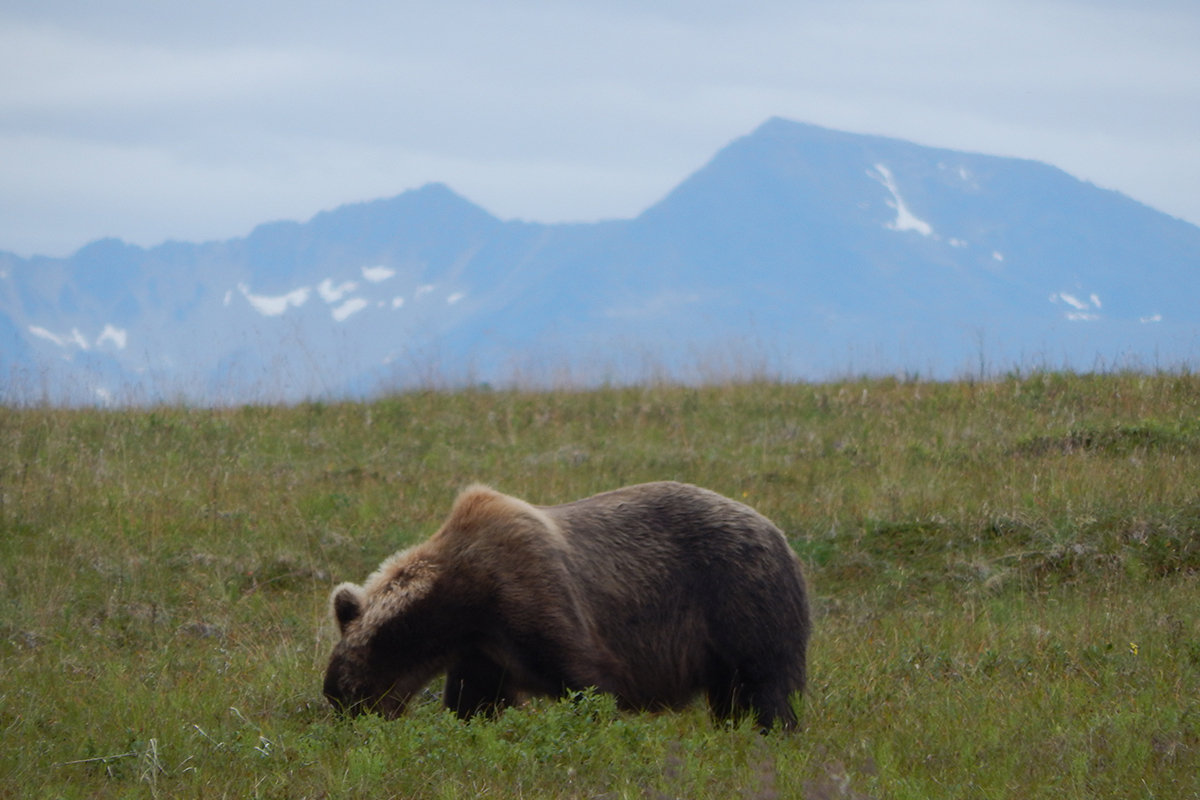 bearviewing19