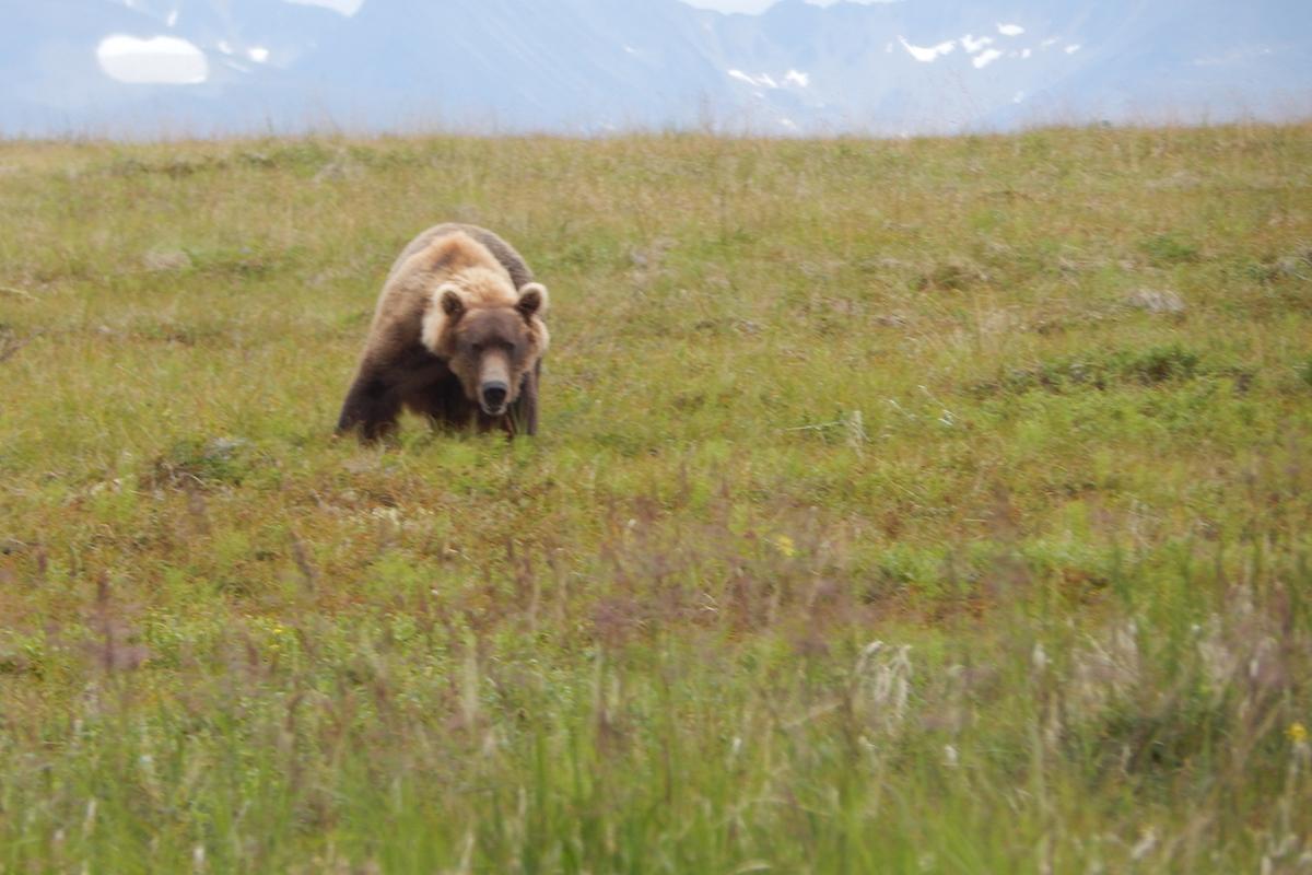 bearviewing21