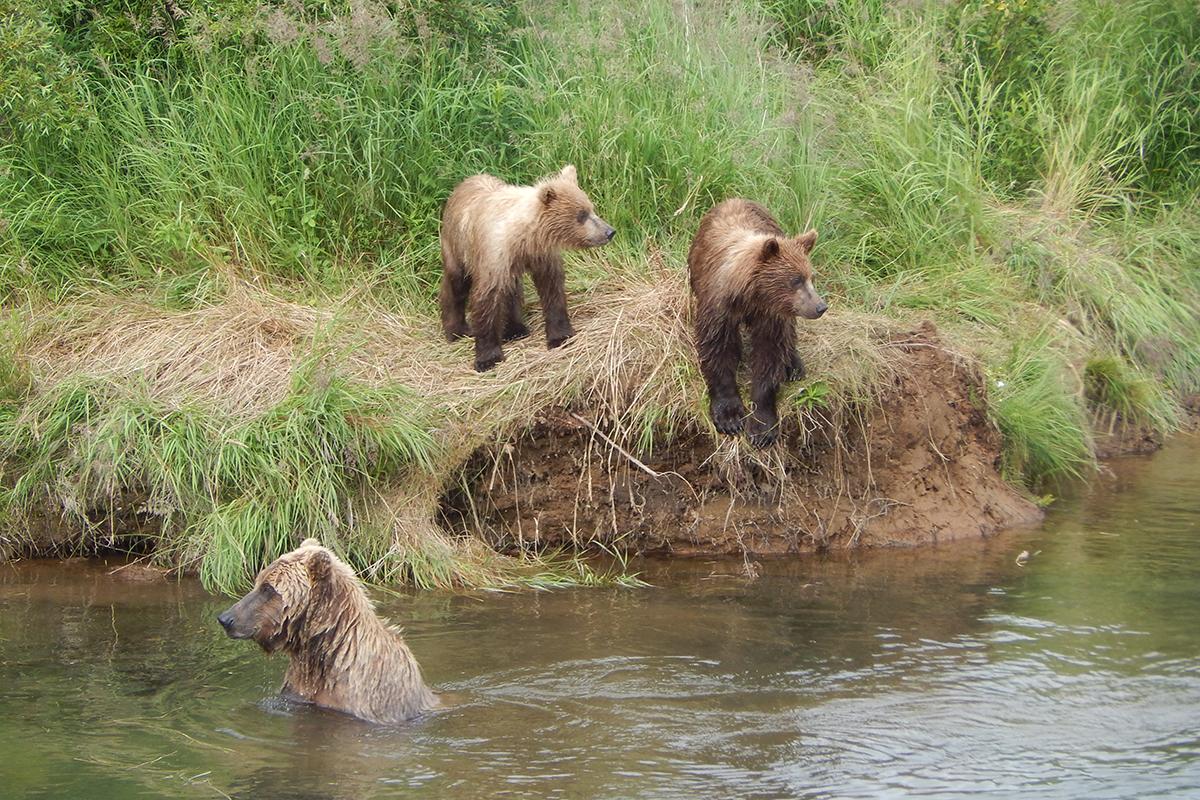 bearviewing5