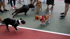 dog walker for multifamily commercial real estate
