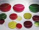 60x15mm Petri Dish, Sterile