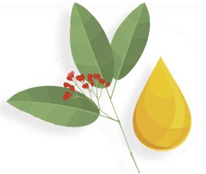 Sandalwood Album Oil as a Botanical Therapeutic in Dermatology