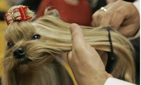 Dog getting its coat combed