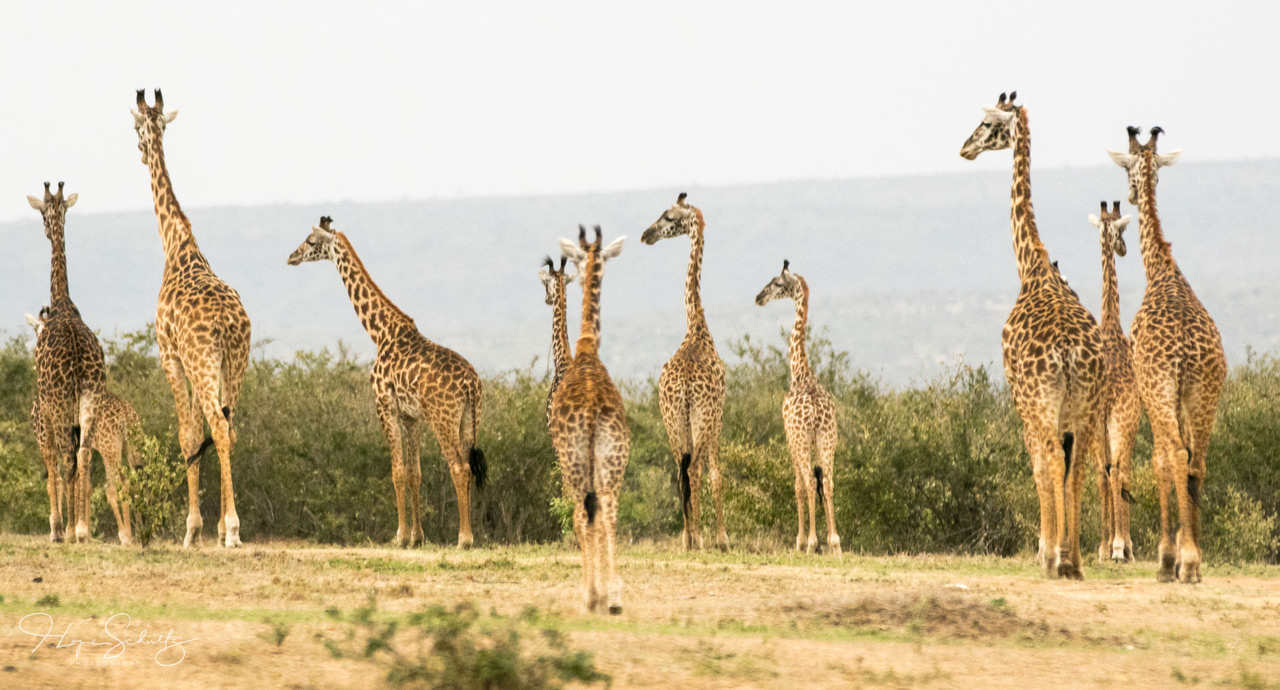 East Africa – Kenya and Rwanda – 10 days