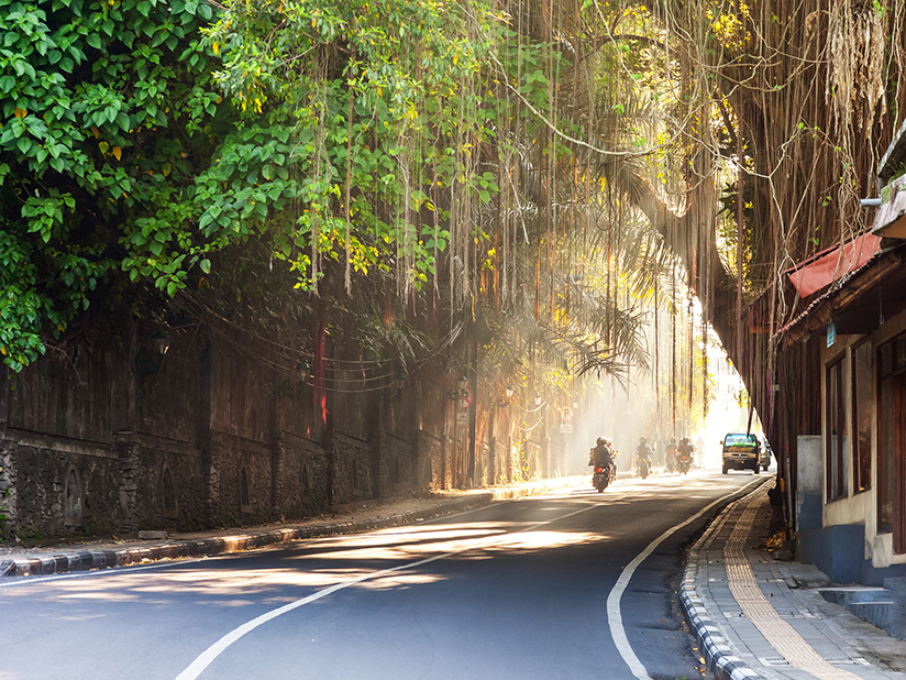 Curving street through Ubud town, Bali, Indonesia with a motorcyclist and vehicles and trees overhanging the road, golden light at the far end