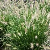 Grass Hameln