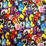 Pansy Assorted