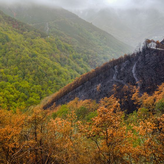 Burned forest renews in autumn