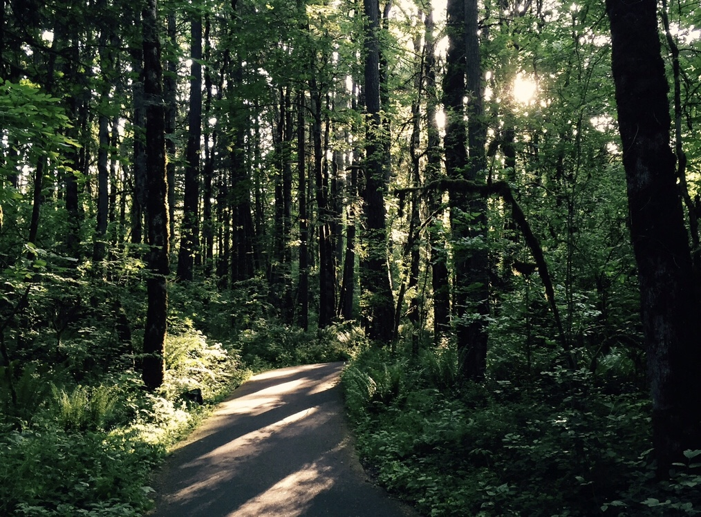 Walking in the Tualatin Hills Nature Park