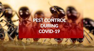 Pest Control Covid