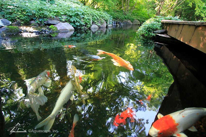 Aquascape pond