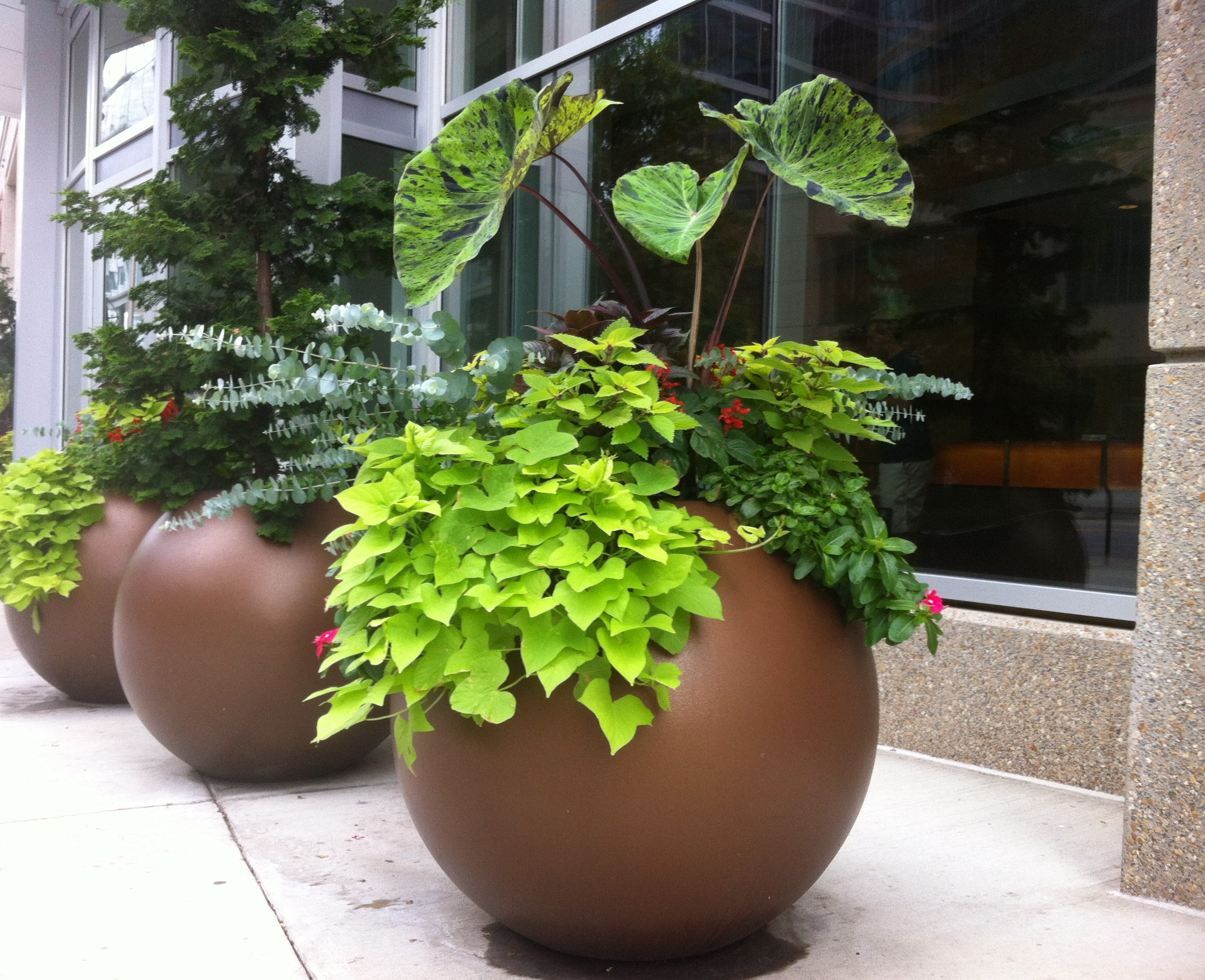 Greenville Planters