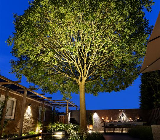 In-Lite tree