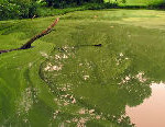 Iowa Algae Control