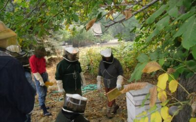 PUTTING FOOD BY AND AN INTRODUCTION TO BEEKEEPING