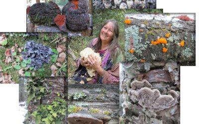 Mushroom & Lichens of Autumn