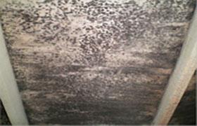 Mold in attic