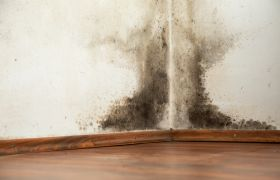 Black mold on a wet wall