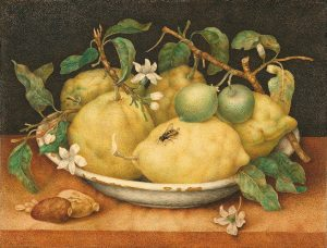 "Giovanna Garzoni, ""Still Life with Bowl of Citrons,"" Tempera on vellum, late 1640s, Getty Museum of Art"