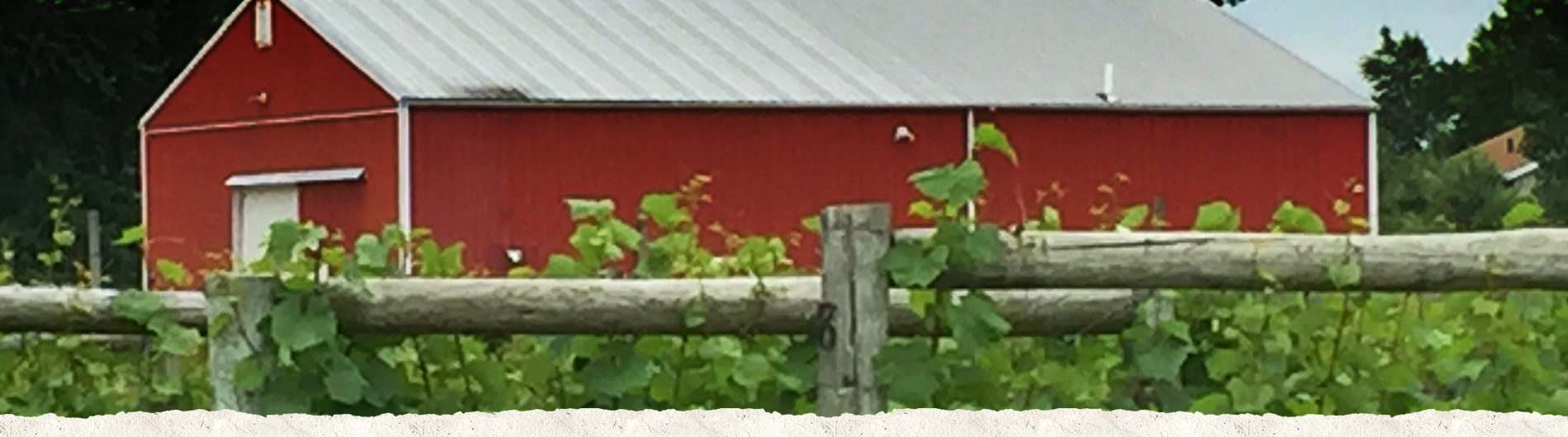 Barn with grape vines