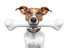Referral Credit Dog Image