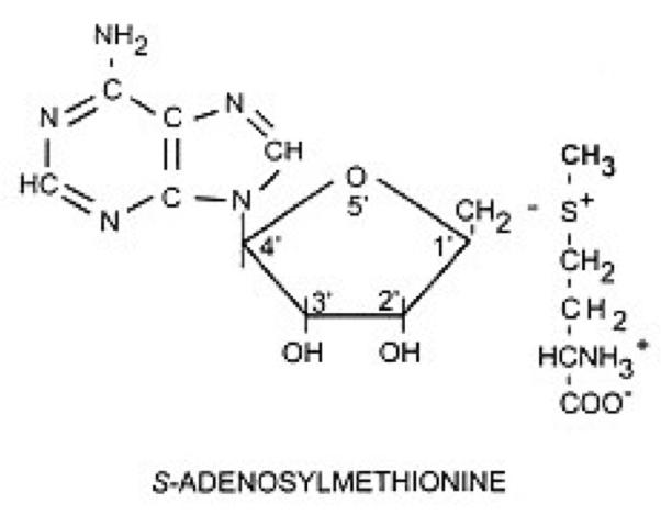 SAdenosylmethionine