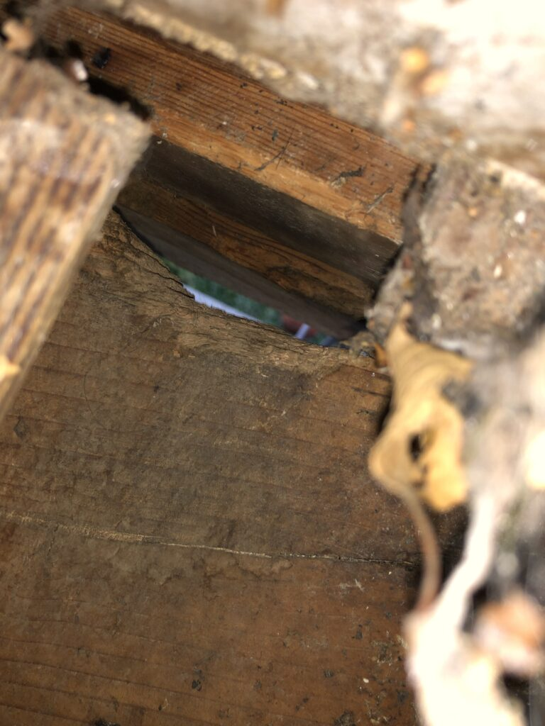 rodent gnawed wood to enter crawl space