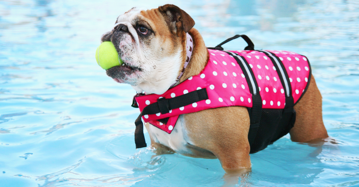 5 Pet Pool Safety Tips for Homeowners