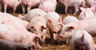Leveduras na nutrição animal e seus benefícios na saúde intestinal