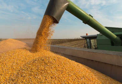 Comparando a agricultura do Brasil e Estados Unidos