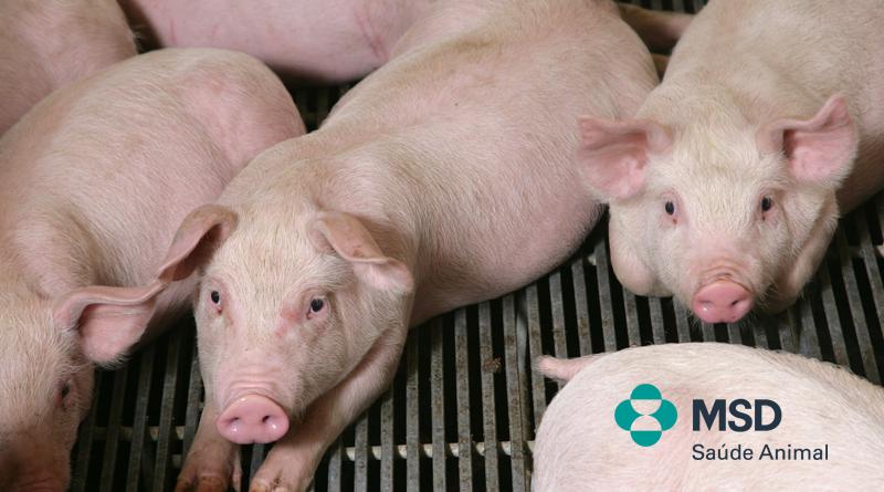 Circovirose suína associada a problemas reprodutivos