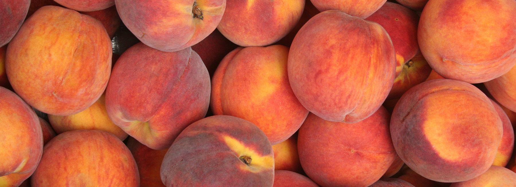 Closeup of Peaches - The Peach Pelican
