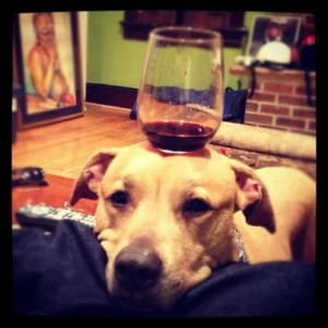 ULTIMATE WINE DOG