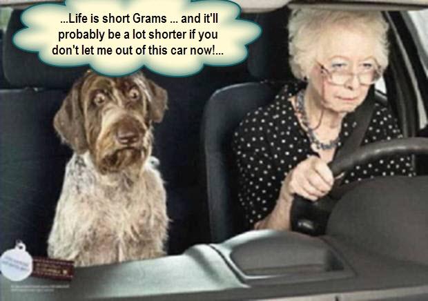 scared dog of driver.w caption jpg