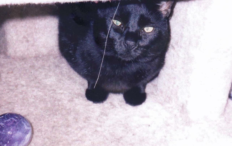 Weepy Memorial Day  2004 hiding under table