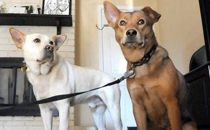 Dog Treks 10 Miles in Freezing  Cold to Find Beloved Mate