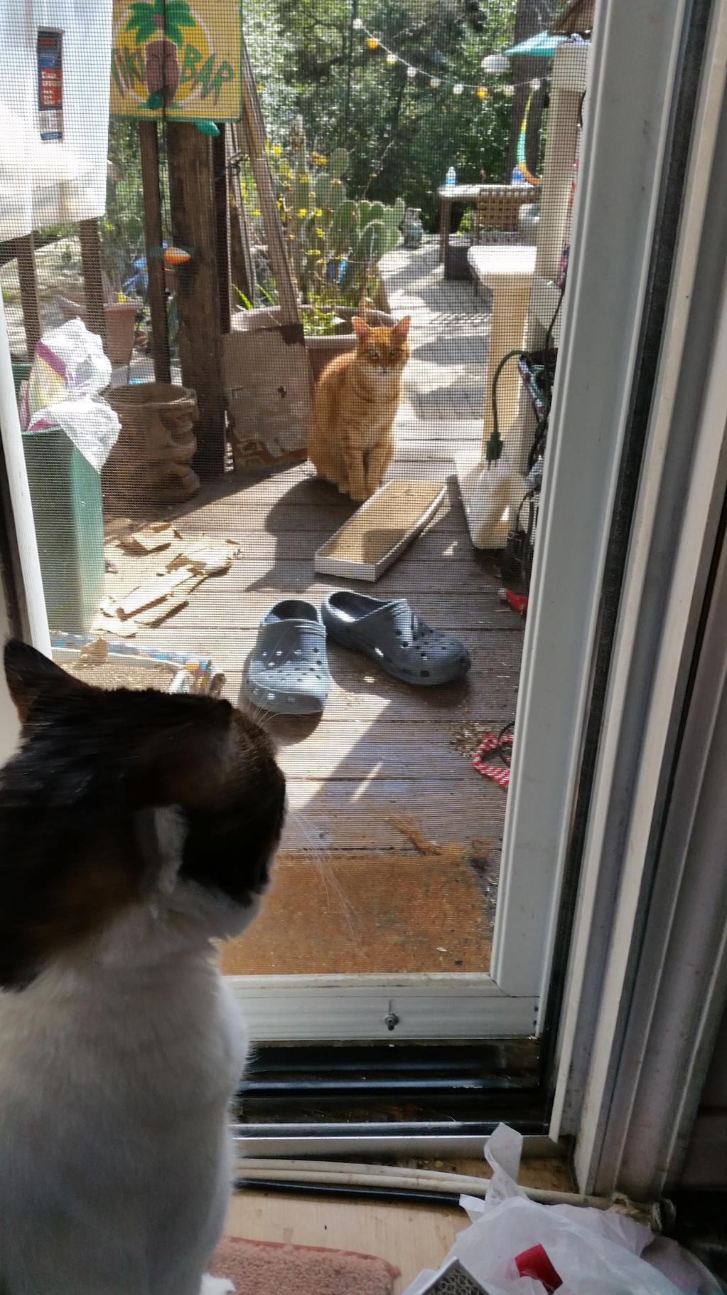 ZACK AND ORNJI LOOKING AT EACH OTHER THRU SCREEN DOOR