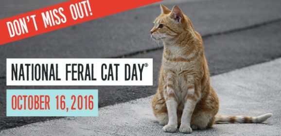 NATIONAL FERAL CAT DAY – Celebrate and Help -FREE Poster