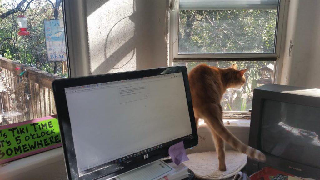 11-23-ornji-getting-into-window