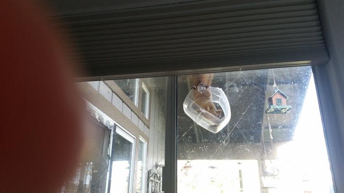 Squirrel litgterally climbs in bird feeder