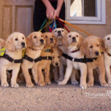 PADS  and mister Blake Foundation, Making A Difference for Puppies Worldwide