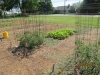 community-garden-5-26-2013-11