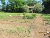 community-garden-5-26-2013-13