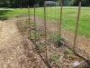 community-garden-5-26-2013-6