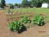 community-garden-5-26-2013-8