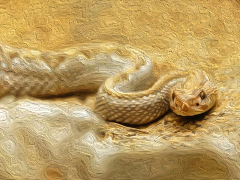 venomous snake bite - Buckfish