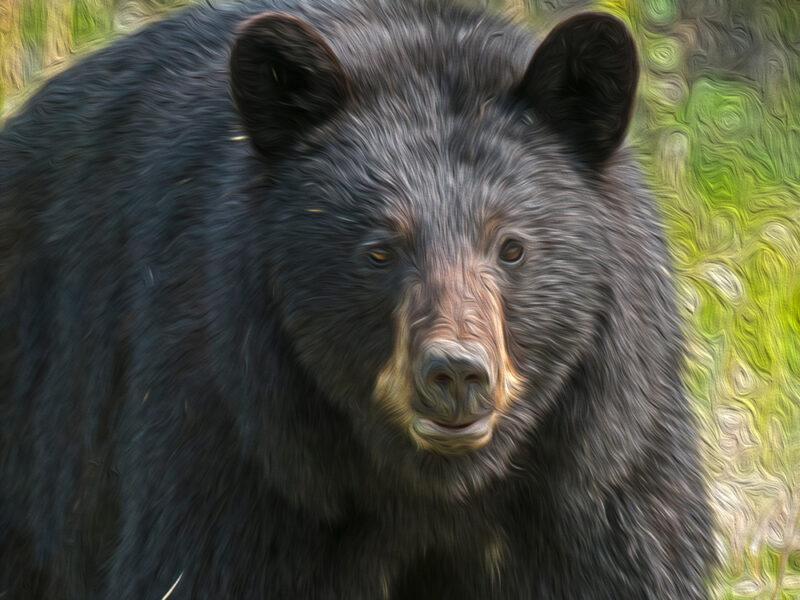 bear hang - Buckfish