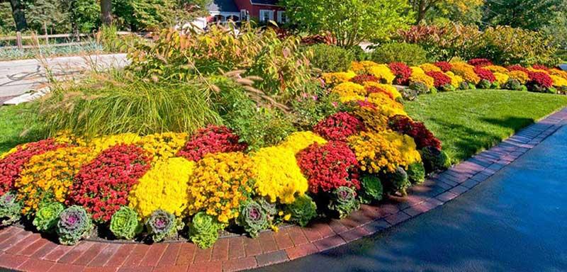 flower-garden-landscape