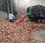 leaf-cleanup-removal