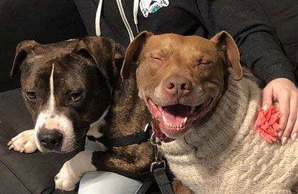 Adopt or Foster with Philly Bully Team